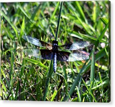 Dragonfly Resting Acrylic Print by D Winston