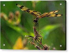 Dragonfly Resting On Flower Acrylic Print