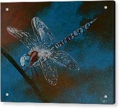 Dragonfly Acrylic Print by Roberta Landers