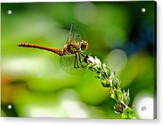 Dragonfly Sitting On Flower Acrylic Print