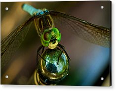 Acrylic Print featuring the photograph Dragonfly by William Jobes