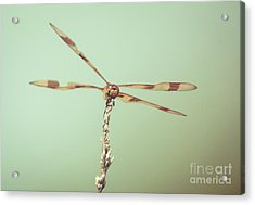 Dragonfly Wings Acrylic Print by Cheryl Baxter