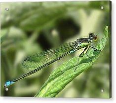 Dragonfly1 Acrylic Print by Svetlana Sewell