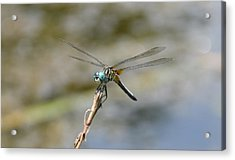 Dragonfly4 Acrylic Print by Bruce Miller