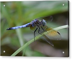 Dragonfly5 Acrylic Print by Bruce Miller