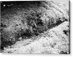 Drainage Ditch Dug In Boggy Peaty Farmland Ballymena, County Antrim, Northern Ireland, Uk Acrylic Print