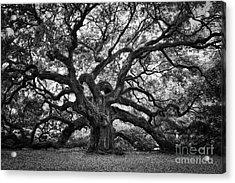 Dramatic Angel Oak In Black And White Acrylic Print