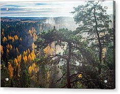 Dramatic Autumn Forest With Trees On Foreground Acrylic Print