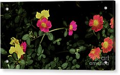 Dramatic Colorful Flowers Acrylic Print