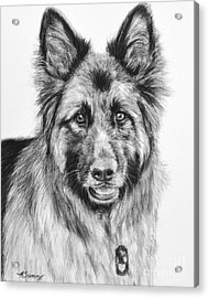 Drawing Of A Long-haired German Shepherd Acrylic Print