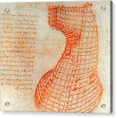 Drawing Of The Ironwork Casting Mould For The Head Of The Sforza Horse Acrylic Print by Leonardo Da Vinci