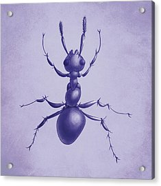 Drawn Purple Ant Acrylic Print