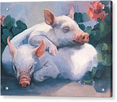 Dream Away Piglets Acrylic Print