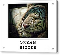Acrylic Print featuring the photograph Dream Bigger by Traci Cottingham