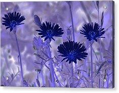 Dream Fields Acrylic Print by Tom Rickborn