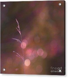 Dream It... Believe It Acrylic Print by Aimelle