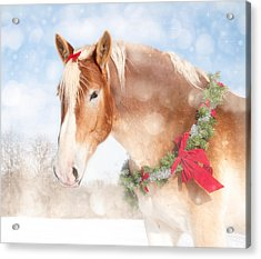 Dream Of A Gift Horse Acrylic Print