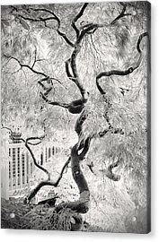 Dream Tree Acrylic Print by Dorit Fuhg