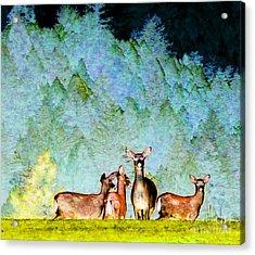 Dreaming Deer Acrylic Print