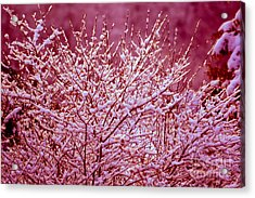 Acrylic Print featuring the photograph Dreaming In Red - Winter Wonderland by Susanne Van Hulst