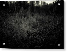 Acrylic Print featuring the photograph Dreaming In by Shane Holsclaw