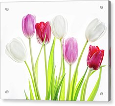 Acrylic Print featuring the photograph Dreaming Of Spring by Rebecca Cozart