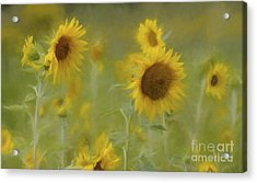Acrylic Print featuring the photograph Dreaming Of Sunflowers by Benanne Stiens