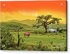 Acrylic Print featuring the photograph Dreamland by Charuhas Images