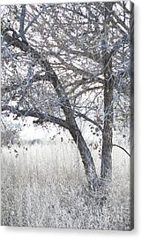 Acrylic Print featuring the photograph Dreamy Bosque Tree by Andrea Hazel Ihlefeld