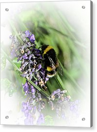 Dreamy Bumble Bee Acrylic Print