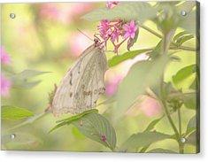Dreamy Butterfly Acrylic Print