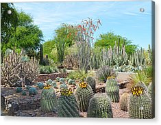 Dreamy Desert Cactus Acrylic Print by Aimee L Maher Photography and Art Visit ALMGallerydotcom