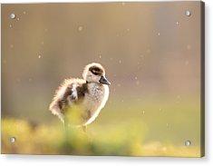 Dreamy Duckling Acrylic Print