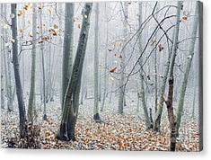 Dreamy Forest Acrylic Print by Svetlana Sewell
