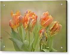 Acrylic Print featuring the photograph Dreamy Parrot Tulips by Ann Bridges