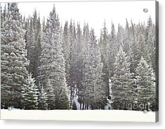 Acrylic Print featuring the photograph Dreamy Pine Snow Forest Landscape by Andrea Hazel Ihlefeld