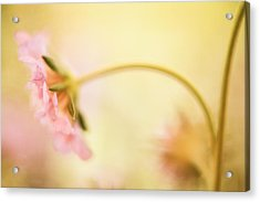 Acrylic Print featuring the photograph Dreamy Pink Flower by Bonnie Bruno