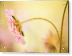 Dreamy Pink Flower Acrylic Print by Bonnie Bruno