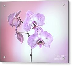 Acrylic Print featuring the photograph Dreamy Pink Orchid by Linda Phelps