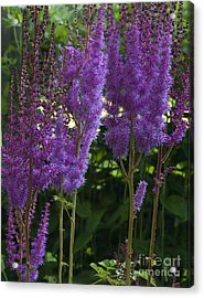 Dreamy Purple Acrylic Print by Robert Pilkington