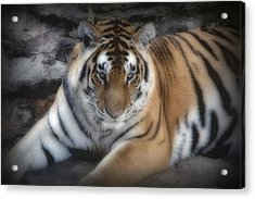 Dreamy Tiger Acrylic Print by Sandy Keeton