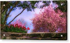 Dreamy Tulip Respite Acrylic Print