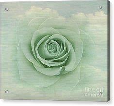 Dreamy Vintage Floating Rose Acrylic Print by Judy Palkimas