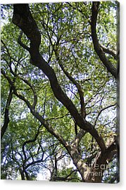 Dred Knots Acrylic Print by Megan Canell  Downing