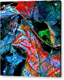 Drenched In Color Acrylic Print by Gwyn Newcombe