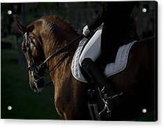 Dressage Acrylic Print by Wes and Dotty Weber