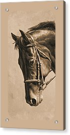 Dressage Horse Sepia Phone Case Acrylic Print by Crista Forest