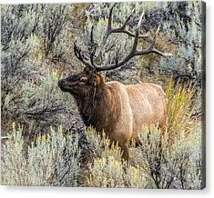 Acrylic Print featuring the photograph Dressed For Rut by Yeates Photography