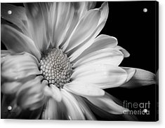 Dressed In Black And White Acrylic Print