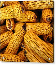 Dried Corn Cobs Acrylic Print